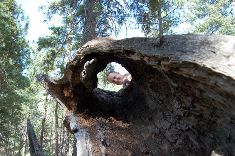 Treeholedadddybella